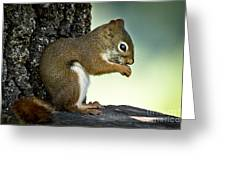 Praying Squirrel Greeting Card