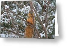 Praying Squirrel  Greeting Card