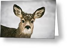 Precious - Mule Deer Fawn - Casper Mountain - Casper Wyoming Greeting Card