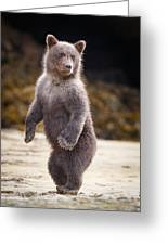 Precious Grizzly Cub Greeting Card