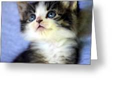 Precious Kitty Greeting Card