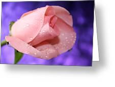 Precious Pink Greeting Card