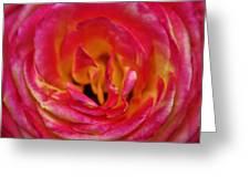 Precious Rose Greeting Card