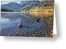 Preening Ducks At Silver Lake Greeting Card