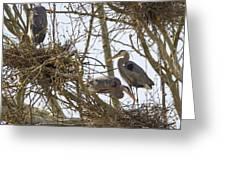 Preparing The Nest Greeting Card