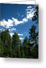 Prescott National Forest Spring Skies Greeting Card