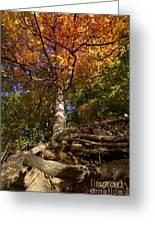 Preserve Trails In Fall Six Greeting Card