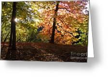 Preserve Trails In Fall Three Greeting Card