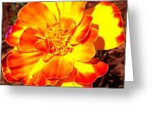 Prettiest Flower In The Garden Greeting Card