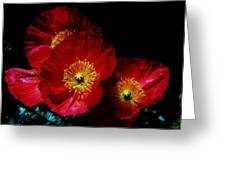 Pretty As A Poppy Greeting Card by Helen Carson