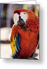 Pretty Bird 2 Greeting Card