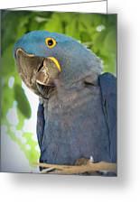 Pretty Bird Greeting Card