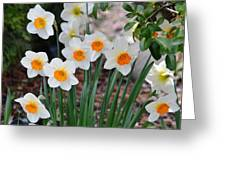 Pretty Daffodil Garden Greeting Card