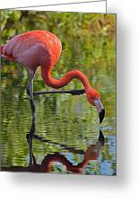 Pretty Flamingo Greeting Card
