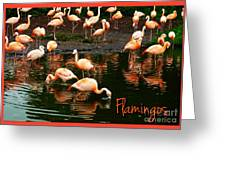 Pretty Flamingos Greeting Card