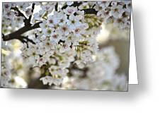 Pretty Flowering Trees Greeting Card