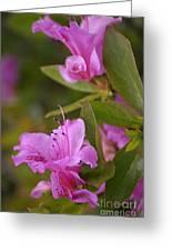 Pretty Fuschia Rhododendron Greeting Card