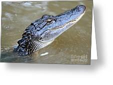 Pretty Gator Greeting Card