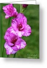 Pretty Gladiolus Greeting Card