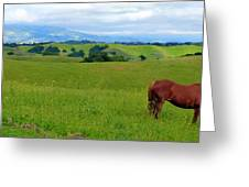 Pretty Horse Grazing In Rolling Hills Greeting Card