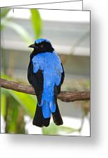 Pretty In Blue Greeting Card