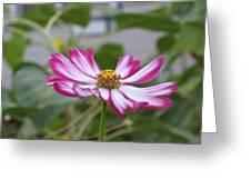 Pretty In Fuscia Greeting Card