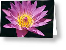 Pretty In Pink And Yellow Water Lily Greeting Card
