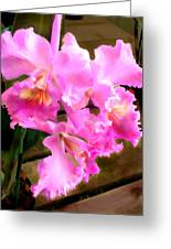 Pretty In Pink Cattleya Orchids Greeting Card