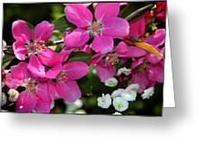 Pretty In Pink I Greeting Card by Aya Murrells