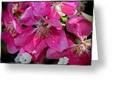 Pretty In Pink IIi Greeting Card by Aya Murrells