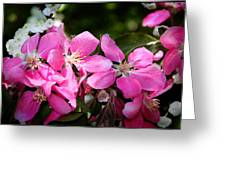 Pretty In Pink Iv Greeting Card by Aya Murrells