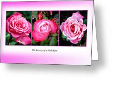 Pretty In Pink Roses Greeting Card by Jo Collins