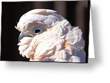 Pretty In Pink Salmon-crested Cockatoo Portrait Greeting Card