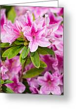 Pretty In Pink - Spring Flowers In Bloom. Greeting Card