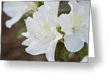 Pretty In White Azalea  Greeting Card
