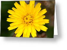 Pretty In Yellow Greeting Card