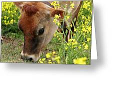 Pretty Jersey Cow Square Greeting Card