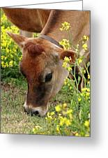 Pretty Jersey Cow - Vertical Greeting Card