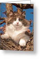 Pretty Kitty High Up Greeting Card