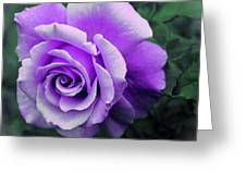 Pretty Lilac Rose Greeting Card