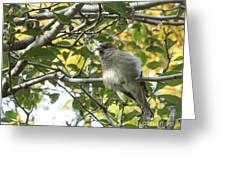 Pretty Little Bird Greeting Card