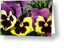 Pretty Little Faces Greeting Card