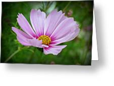Pretty Little One Greeting Card