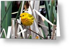 Pretty Little Yellow Warbler Greeting Card