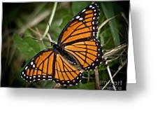 Pretty Monarch Greeting Card