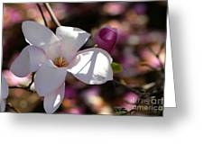 Pretty Pale Pink Magnolia Greeting Card