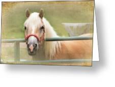 Pretty Palomino Horse Photography Greeting Card