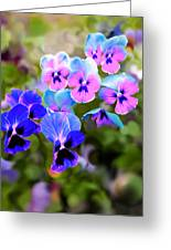 Pretty Pansies 2 Greeting Card