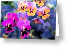 Pretty Pansies 3 Greeting Card