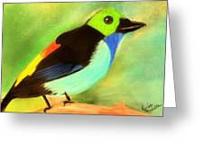 Pretty Paradise Tanager Greeting Card